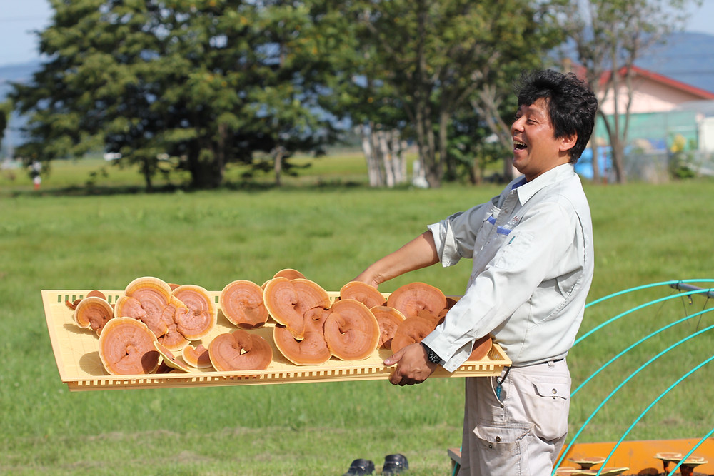 2018 Organic red reishi havest (hokkaido/ Japan)