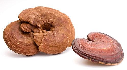 Whole Mushroom Organic Red Reishi 1kg
