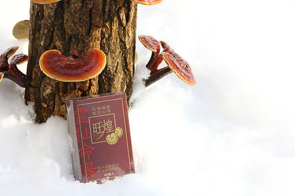 the great natural environmental of hokkaido is where our Hokkaido reishi is bred it is why it is the best reishi, we intend to keep it's quality high by protecting this superb environment intact