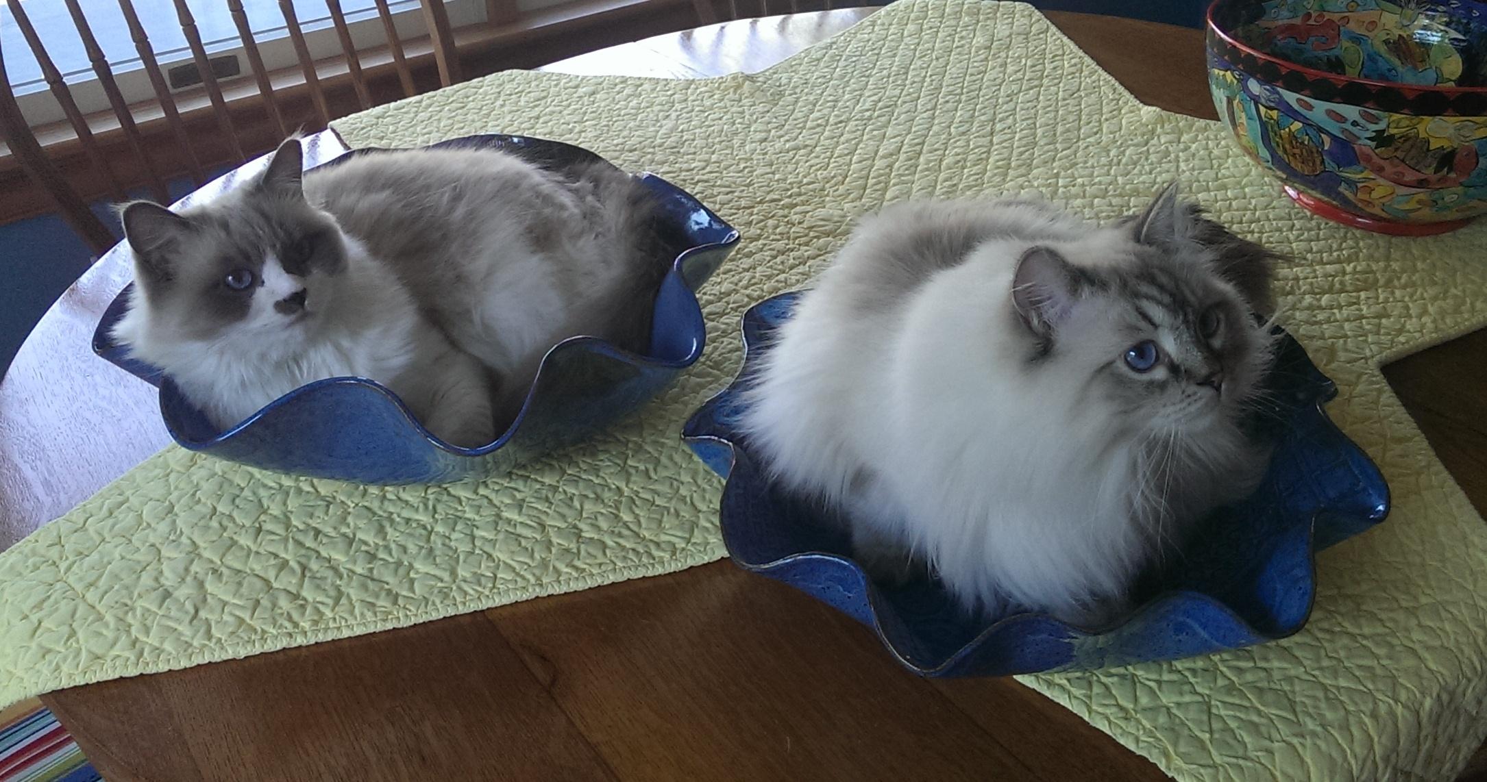 Cats in wavy blue pots