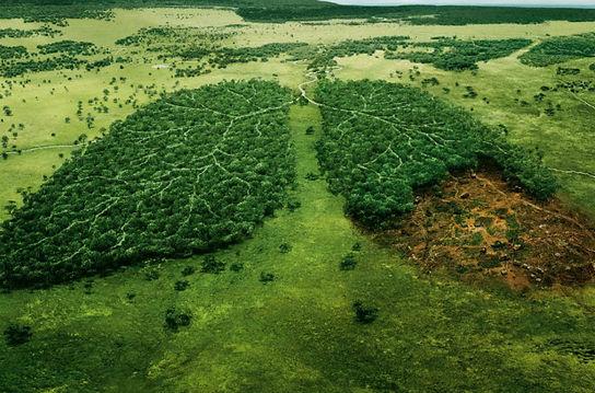 mal_na_ecologia2.jpg