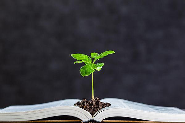 educacao-ambiental-o-que-e-conceitos-sig