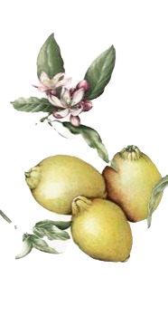 Limoncello Salento