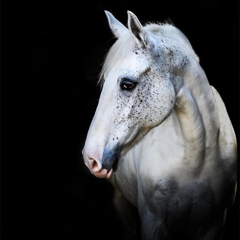 'Horse Portrait' by Karen Greene ( 12 marks )