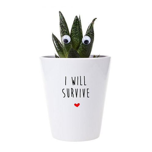 'i will survive' plant & growing kit
