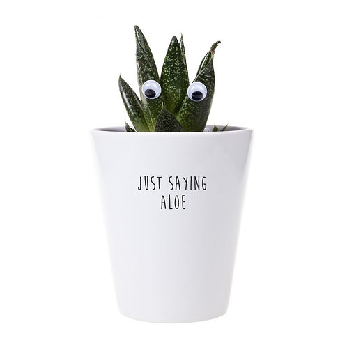 'just saying aloe' plant & growing kit