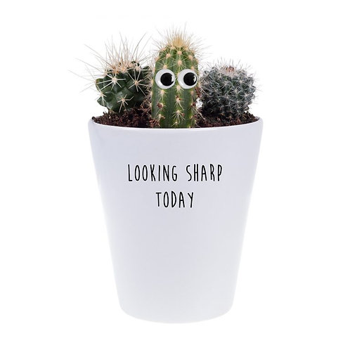 'looking sharp today' plant & growing kit