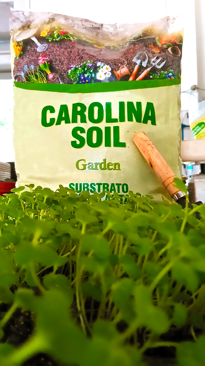 Carolina Soil 01_edited.png