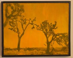 Marigold Day