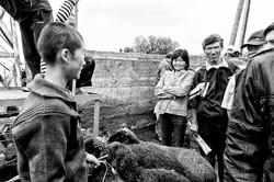 KOCHKOR - Marché aux bestiaux