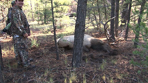 Arizona elk hunting,  zero hunt fees, chappell guide service, arizona archery elk hunts