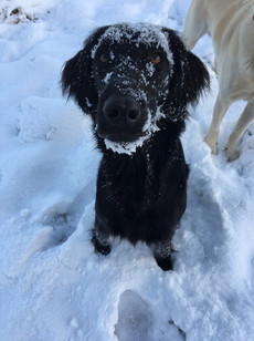 Lilu Schnee.JPG