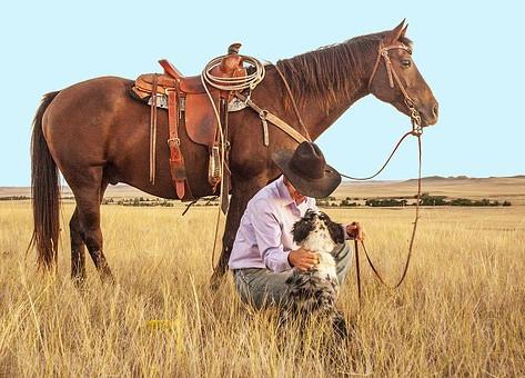Atların Evcilleştirilmesi ve Tay Kırma Eğitimi
