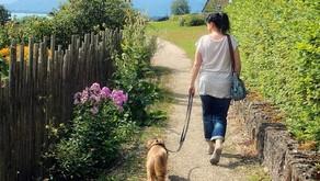Köpekler için Tehlike: Pisipisi Otu