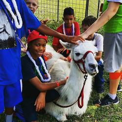 Petting zoo fun at Champions Kids Camp 2015. No spitting incidents so far