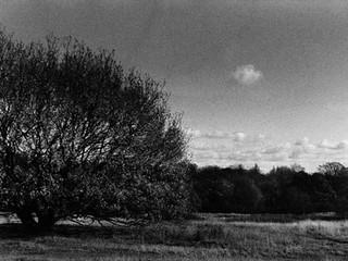 Tree Series 5.jpg
