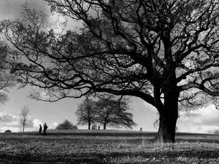 Tree Series 3.jpg