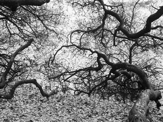 Tree Series 1.jpg