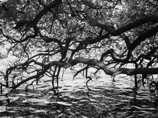 Tree Series 2.jpg