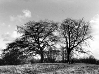 Tree Series 6.jpg
