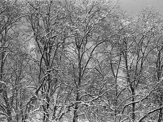 Tree Series 4.jpg