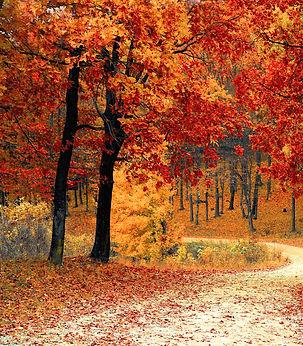fall-1072821_edited.jpg