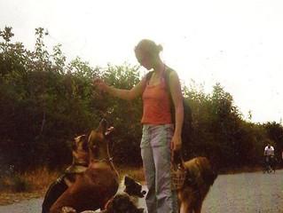 An die Leine: ja oder nein? - Hunde in Niederösterreich