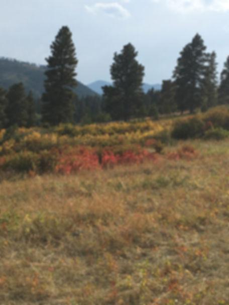 Blacktail ranch 2018.jpg