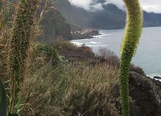 February at Madeira