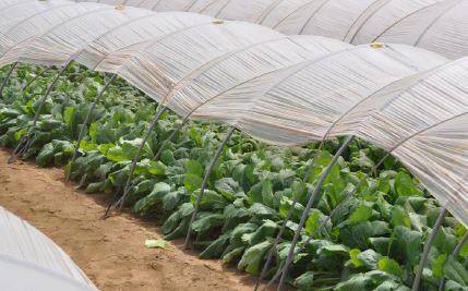 今月の『農家さんのお話』