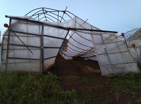 台風被害にあわれた農家さんを応援します!