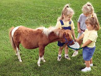 Quer levar as crianças para andar à Cavalo em Joinville?