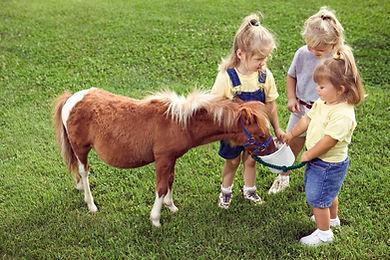 Pony klubík