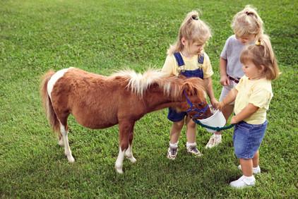 Girls feeding Pony