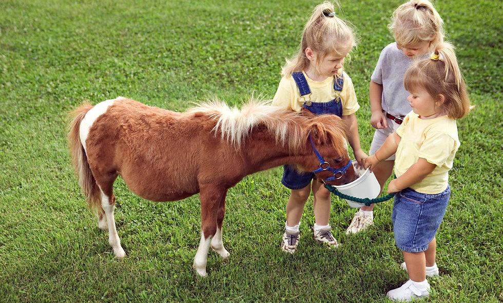 Pferdebetreuer Lehrgang