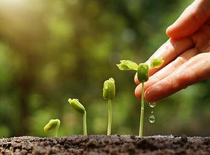 Agriculture. Growing plants. Plant seedling. Hand nurturing and watering young baby plants