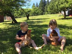 Kids Chickens