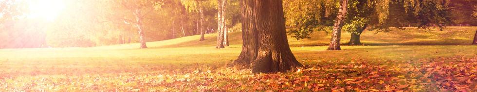 Banner herfstfotografie.jpg