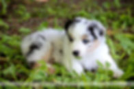 Puppies 5 weeks with Lauri-2.jpg