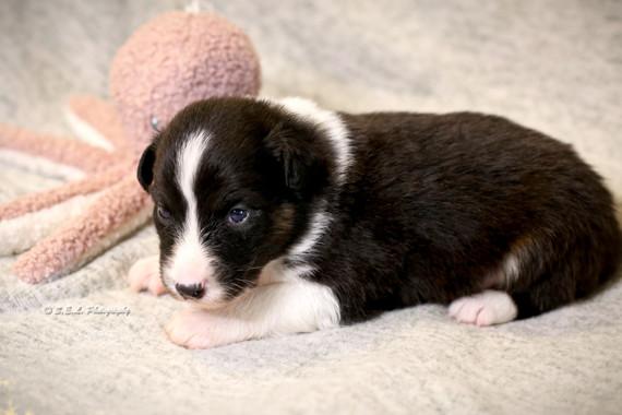 Puppies 19 days Trip-1.jpg