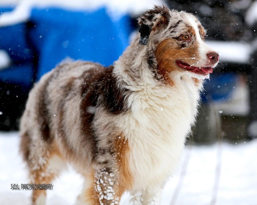 Nikita 2nd Birthday Snow Play-22