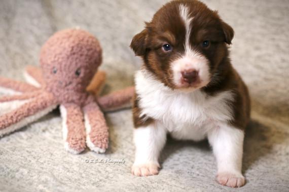 Puppies 19 days Summer-1.jpg