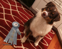 Best puppy in grp home pic-1