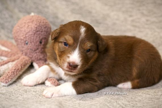 Puppies 19 days Spree-1.jpg