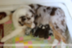 Puppies Day 1-1.jpg