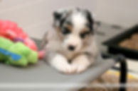 Puppies 4 weeks candids-10.jpg