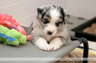 Puppies 4 weeks candids-10.jpg
