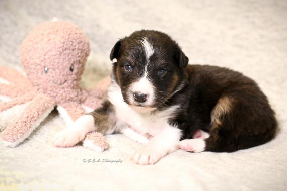 Puppies 19 days Pfizer-1.jpg