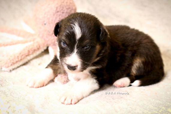 Puppies 19 days Zoom-1.jpg