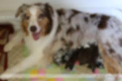 Puppies Day 1-2.jpg